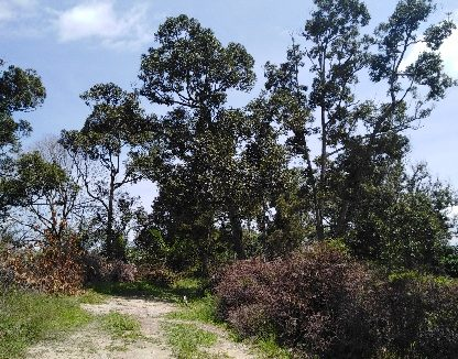 Kampung Cinta Manis Sertik Bentong